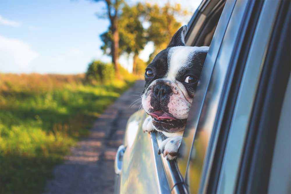 Safe and Happy Travels with Your Pet