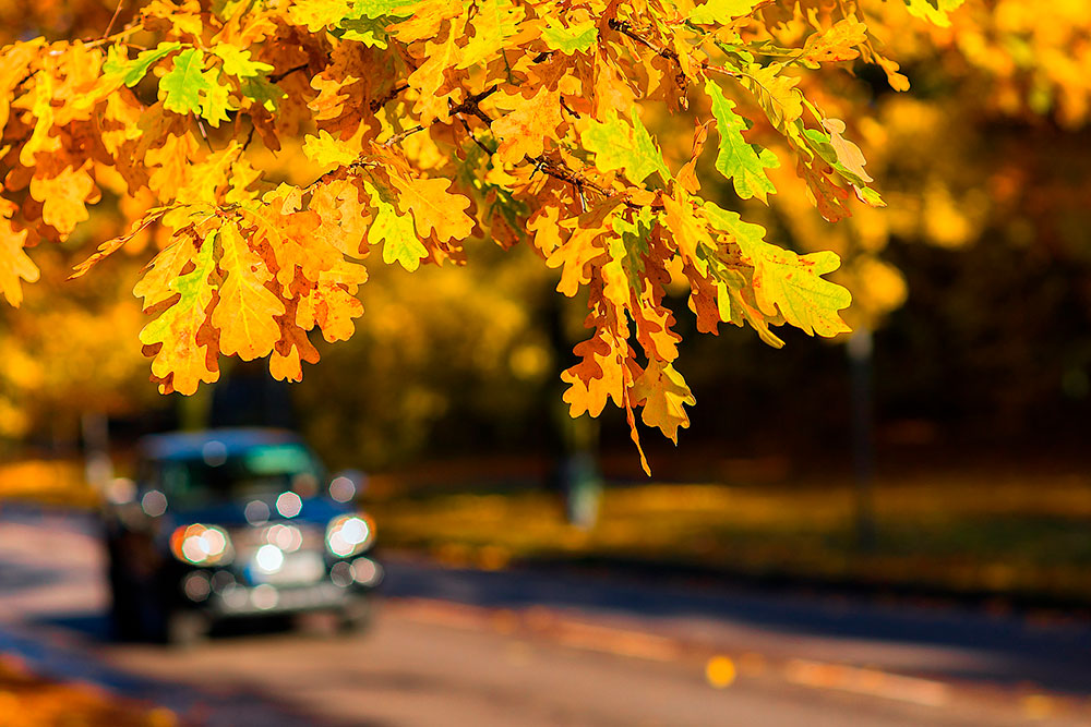 Preventive Maintenance Tips for Fall Car Care Month